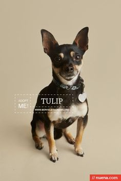 Professional Rescue Dog Photography