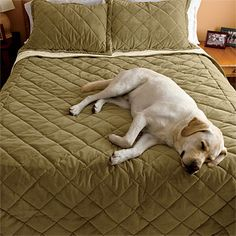 Charming Microfiber DogProof Coverlet   Best Dog Proof Bedding Ever!