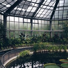 #glasshouse #conservatorygreenhouse