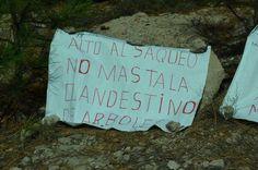 Se pronuncian ONG's contra la devastación del bosque en la Sierra Tarahumara | El Puntero