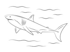Great White Shark Coloring page Batman Coloring Pages, Shark Coloring Pages, New Year Coloring Pages, Bible Verse Coloring Page, Disney Coloring Pages, Free Printable Coloring Pages, Baby Great White Shark, Great White Shark Diving, Curious George Coloring Pages