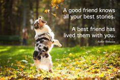 Australian Shepherd Dog Quotes Quotesgram