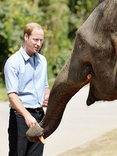 On 4 Mar 2015, Prince William, UK, Duke of Cambridge pets 13-year-old Ran Ran, a female elephant who was found injured nearby & rescued in China. PA Photo by Landov. During his meeting with President Xi Jinping earlier this week, Prince William expressed his hope that China would become a world leader in the fight for animal preservation. He also thanked the President for China's recent decision to ban the import of ivory carvings for 1 year to help safeguard Africa's elephant population.