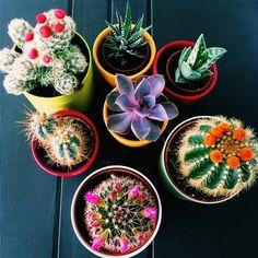 !!Cactus party!! | shopbuddylove | buddylove | plants | cactus | succulents | green thumb | indoor garden | home garden | DIY | DIY home garden