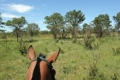 Watching impalas.