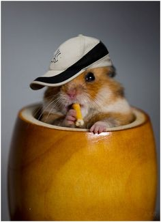 A NYY Hamster! COOL! Won't replace Jeter but it's almost as cute! LOL!