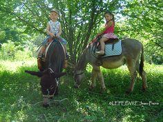 Natur'ânes - Office de Tourisme d'Alès - Cevennes Tourisme