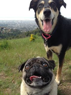 Looks like my Luigi, and my brother's dog Allie! Amazing!