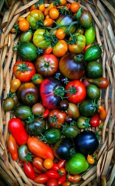 Fruits And Vegetables Pictures, Vegetable Pictures, Fruits And Veggies, Vegetables Photography, Fruit Photography, Fruit And Veg, Fresh Fruit, Beautiful Fruits, Exotic Fruit