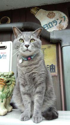#neko #cat  (via cat1230)