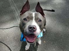 MUSTARD - A1084206 - Manhattan - Publicly Adoptable Please Share: TO BE…