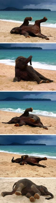 AWE?!  Baby elephant discovering and playing on the beach for the first time! http://stuffistolefromtheinternet.com/wp-content/uploads/2012/07/baby_elephant_on_a_beach_2.jpg