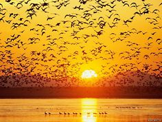 This article have 45 Beautiful Landscape Photography and also some amazing nature photos that will take your breath-away. These photos were shot all around the Beautiful World, Beautiful Places, Beautiful Pictures, Beautiful Birds, Sunset Sky, Sunset Beach, Sunset Pics, Summer Sunset, Beach Art