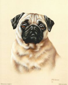 this looks just like my comet Animal Paintings, Animal Drawings, Chinese Pug, Animals And Pets, Cute Animals, Pug Art, Pug Pictures, Pug Love, Art Plastique