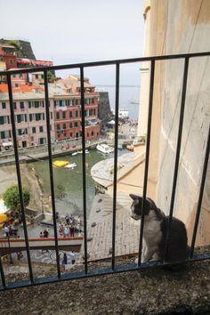 港町のためか、ヴェルナッツァには猫が多いようです。