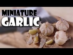 Miniature Garlic; Polymer Clay Food Tutorial - YouTube