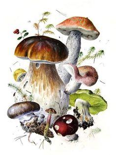 александр вяземский ботаническая живопись - Google Search