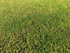 It is often a dream of home owners to have a beautiful patch of bright green lawn in their backyard. Many people will be have been watching the cricket and admiring the beautiful condition of the outfield turf covering the Melbourne Cricket Ground. Some people are a little less enthusiastic...