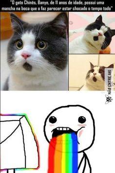 necessito de um gato