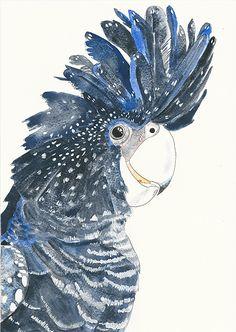 Cheeky Black Cockatoo