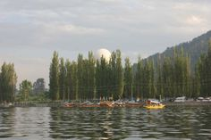 Srinagar Photos - Pic 8591 The Dal Lake in Srinagar looking all fresh with activities and vibrance through the day!