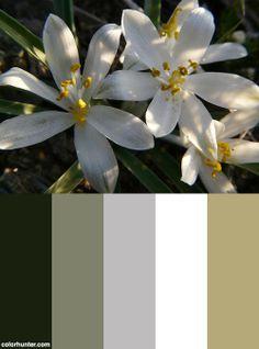 Sand Lily Color Scheme