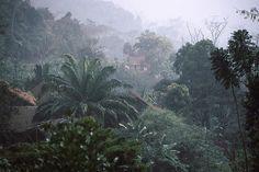 Rainforest in Ranomafana, Madagascar