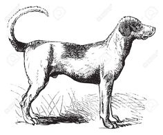Foxhound or Canis lupus familiaris, vintage engraving. Old engraved illustration of a Foxhound. Free Vector Images, Vector Free, Engraving Illustration, Logo Design Trends, The Fox And The Hound, Moose Art, Animals, Breakfast Tea, Vintage