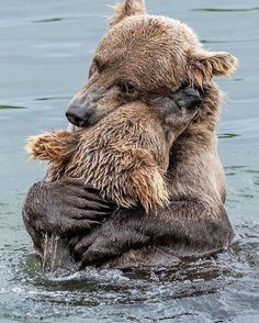 Canon Photography: Bear Hug Wonderful wildlife photography by Amazing Animals, Animals Beautiful, Nature Animals, Animals And Pets, Wildlife Nature, Animals Images, Wild Animals, Animal Kingdom, Cute Baby Animals