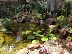 charming backyard water garden in richmond tx features a constructed wetlands filter, gardening, landscape, ponds water features, Constructed wetland filter keeps the pond clean clear and healthy and doesn t look like a filter at all Diy Water Feature, Backyard Water Feature, Ponds Backyard, Backyard Waterfalls, Small Water Features, Water Features In The Garden, Bog Garden, Garden Pool, Landscaping Supplies