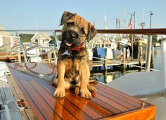 Three Dog Friendly Hotels In The U S A Pet And