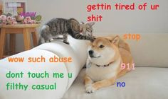 wow such abuse, doge is getting tired of this. pls call 911, wow such emergency!