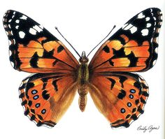 Realistic butterfly paintings - photo#9