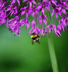 Nikki Wilson Nature Photography | insects