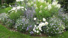 Organic Weed Killer Is A Safer Alternative Organic Compost, Organic Gardening, Herb Garden, Vegetable Garden, Plant Diseases, Weed Killer, White Gardens, Plantation, Flowers Nature