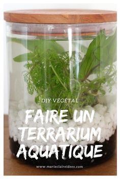 DIY: how to make an aquatic terrarium # DIY, house, DIY materials, br . - DIY: how to make Mini Terrarium, Cactus Terrarium, Garden Terrarium, Glass Terrarium, Diy Plante, Plants In Jars, Turtle Quilt, Indoor Water Garden, Indoor Gardening