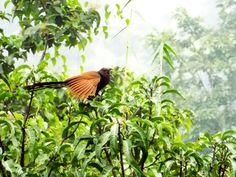 Konkan Bird