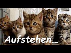 Hallo du da .... du musst aufstehen ⏰ - YouTube Animals And Pets, Funny Animals, Funny Clips, Funny Animal Videos, Wtf Funny, Good Morning, Humor, Cool Stuff, Youtube