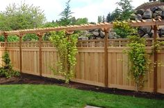 Trellis above fence