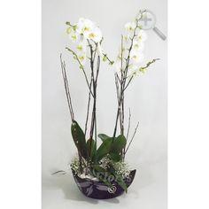 Floreria - Flores Elegantes de Mexico orquideas