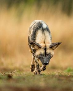 Stalker by Jaco Marx                                                                                                                                                                                 Plus