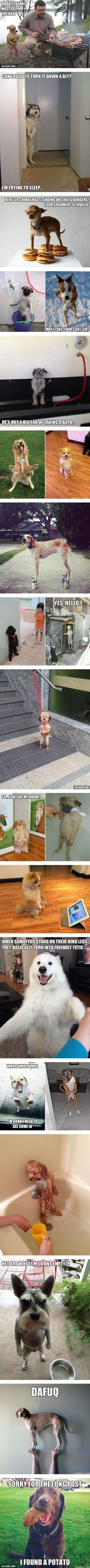 Awkwardly Standing Dogs