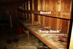 Inside Our Chicken Coop: Lessons Learned, Key Features and Tips