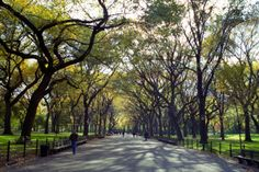Central Park, in New York.