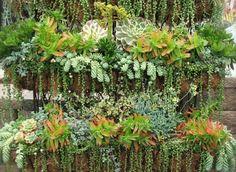 Plantas suculentas para transformar el exterior de la casa.