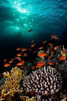 Ocean Life ☆