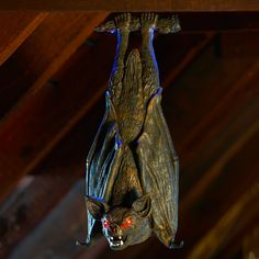 For a Halloween prop that really rocks, check out this lifelike bat. Hang him from your porch or ceiling to spook guests and trick-or-treaters when his eyes light up and he makes menacing screeching sounds.