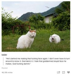 30 Tumblr Posts About Animals That Will Leave You Laughing | Blaze Press That horse though? He ok??