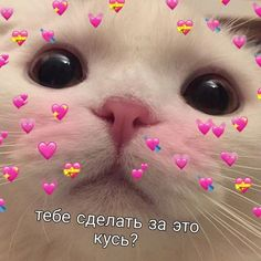 Cute Love Memes, Funny Video Memes, Wholesome Memes, Stupid Memes, Love Pictures, Animal Memes, My Sunshine, Besties, Cute Cats