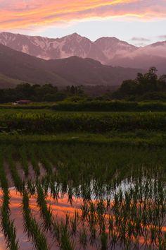 水田を染める夕暮れ -rice field(Japan)